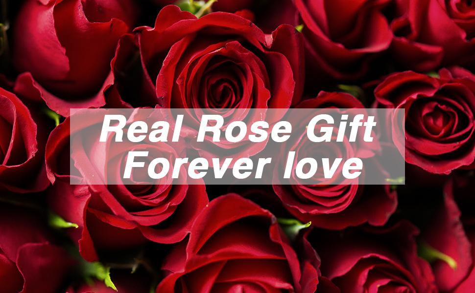 Geburtstag rote rosen zum Blumenversand