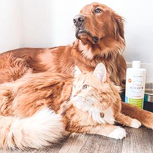 Eliminate pet bad breath. Pet parents love it!