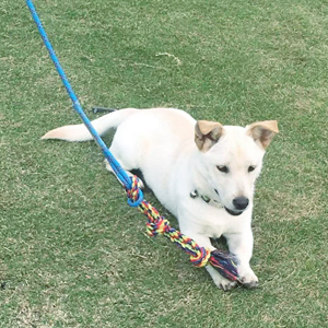 Dog Training Too