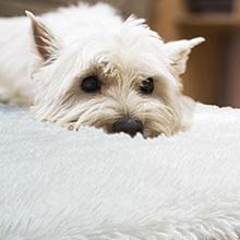 safe rug for pet