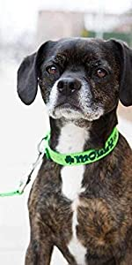 dogIDS Personalized St. Patrick's Day Dog Collar - Embroidered, Custom, Durable, Adjustable, Safe