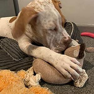 dog puppy chews