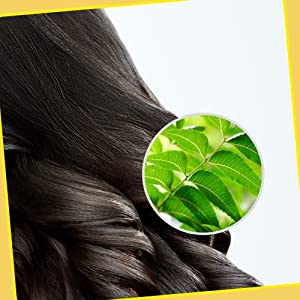 Potential of Neem in Scalp and Hair Health