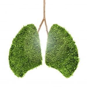 Air purifiers hepa for home indoor room cleaner smokers asthma allergy hepa filter dust virus germ