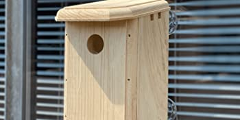 Eastern White Pine Wood Bird House Mounted on a Window for Easy Observation