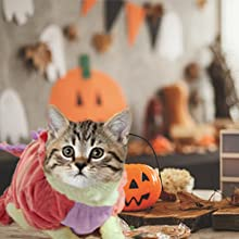halloween costume for cats