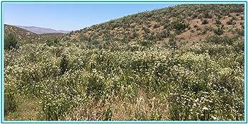 jl local organic california smudge sticks white sage bundles