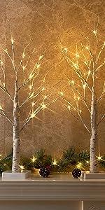 Birch Tree Light
