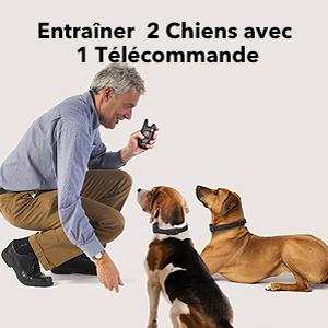 entrainer 2 chiens avec 1 telecommande