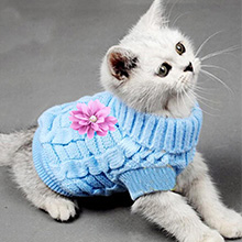 adorable and cute cat sweater