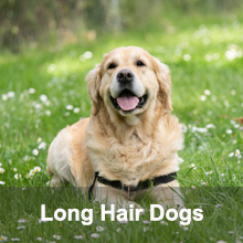 deshedding for large long haired dogs