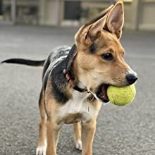 Bark collar for dog