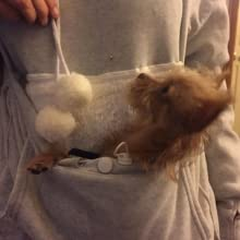 Unisex Cat Ear Big Kangaroo Pouch Hoodie Long Sleeve Pet Cat Dog Holder Carrier Sweatshirt