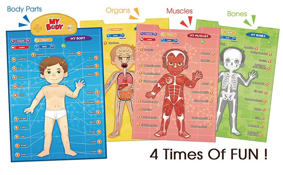 educational learning toy poster mat interactive body parts organs bones muscles quiz talking kids