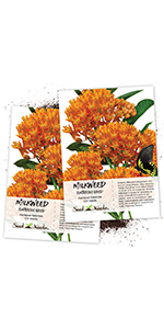 Butterfly Milkweed Seeds for planting