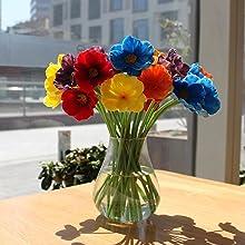 multicolor poppies