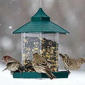 bird feeders hanging