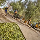 harvest, olives, olive oil, grove