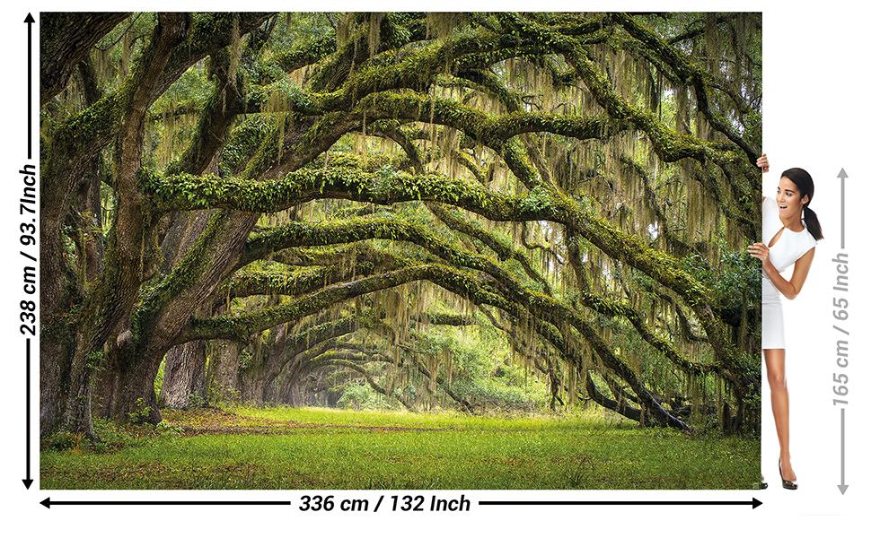 GREAT ART Mural De Pared – Avenida De Roble – Bosque Naturaleza Paisaje Verano Bosque Musgo Misticismo Quercus Cuento De Hadas Bosque Parque Ramas Foto Tapiz Y Decoración (336 x 238 cm):