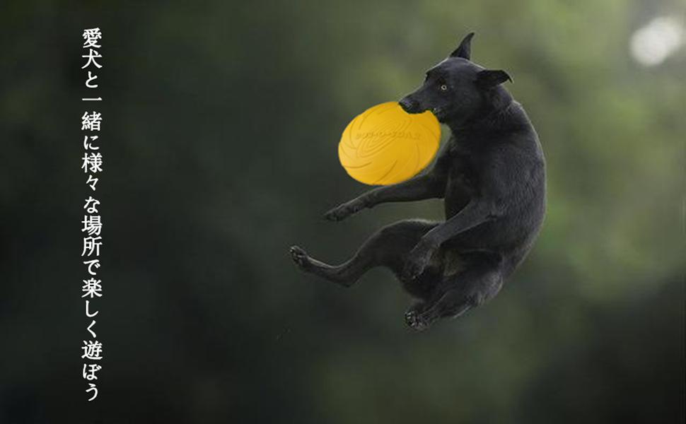 フリスビー 犬用