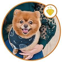 Premium Support cat probiotic grass saver interceptor plus dewormer one dog supplement for itching