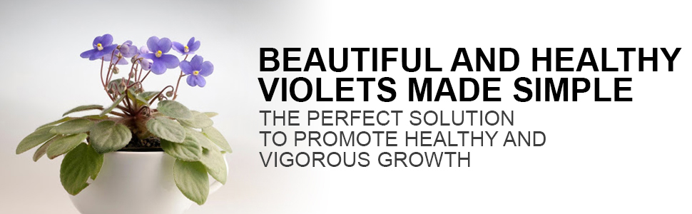 beautiful and healthy violets, perfect solution, vigorous growth, healthy plants, african violets
