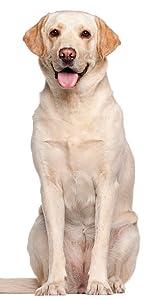 dog dryer, pet hair dryer, dog hair dryer, dog blower