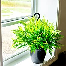 how to mix apply liquid indoor house plant food fertilizer perfect plants nursery hanging fern food