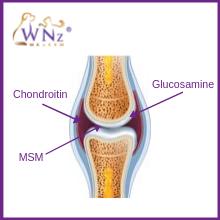 glucosamine chondroitin and MSM for dogs anti inflammatory arthritis
