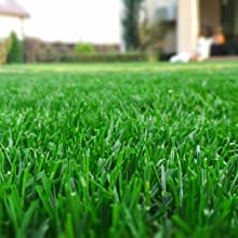 green grass house seaweed humic fulvic fertilizer spray garden turf liquid nutrients plants lawn