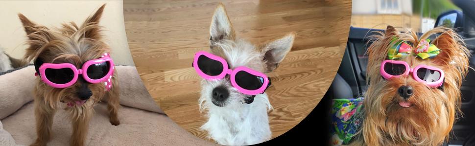da07153aae6a Amazon.com : Dog Goggles - Small Dog Sunglasses Waterproof Windproof ...