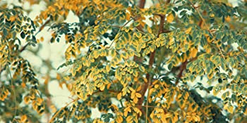 Moringa Bio Nutrimea integratore alimentare energia difese immunitarie antiossidante