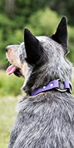 dogIDS Personalized Waterproof Soft Grip Safety Dog Collar - Adjustable, Odor Resistant
