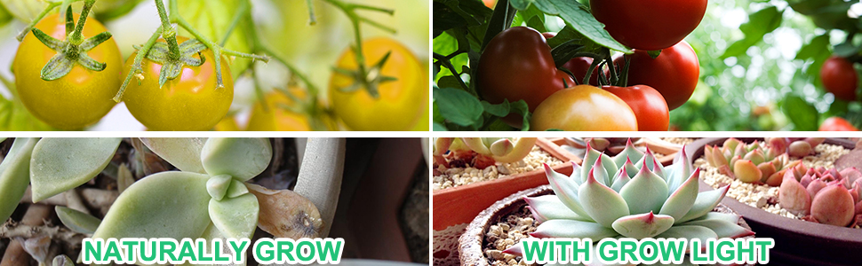 plant grow lights indoor