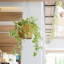 cup hooks plant hooks for hanging baskets ceiling hooks for hanging lights picture hooks for hanging