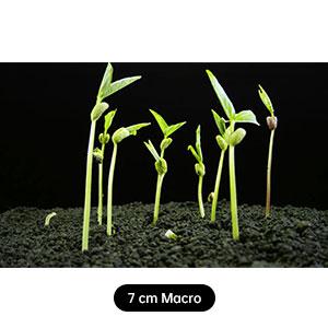 7 cm Macro