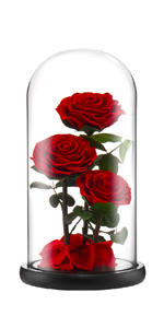 preserved rose red