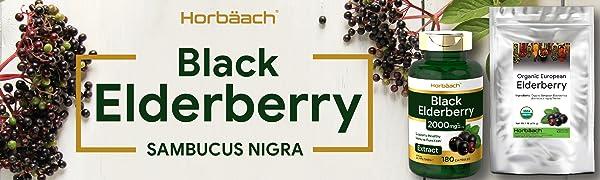 horbaach black elderberry
