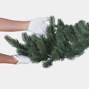 Shape the branches vertically upward as much as possible to give the tree its full appearance