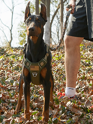 tartical dog harness