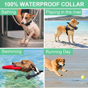 training collar fpr dogs
