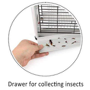 Drawer for collecting insects