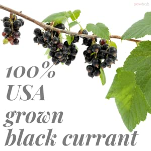 currants for baking dried black currant fruit currents zante raisins jelly tea organic unsweetened