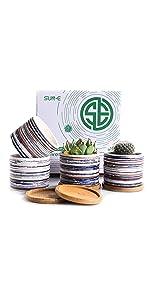 SUN-E 3.15 Inch Ceramic Plants Pot Set