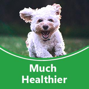 Much Healthier