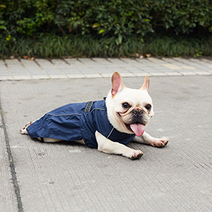 Dog raincoats for small dogs