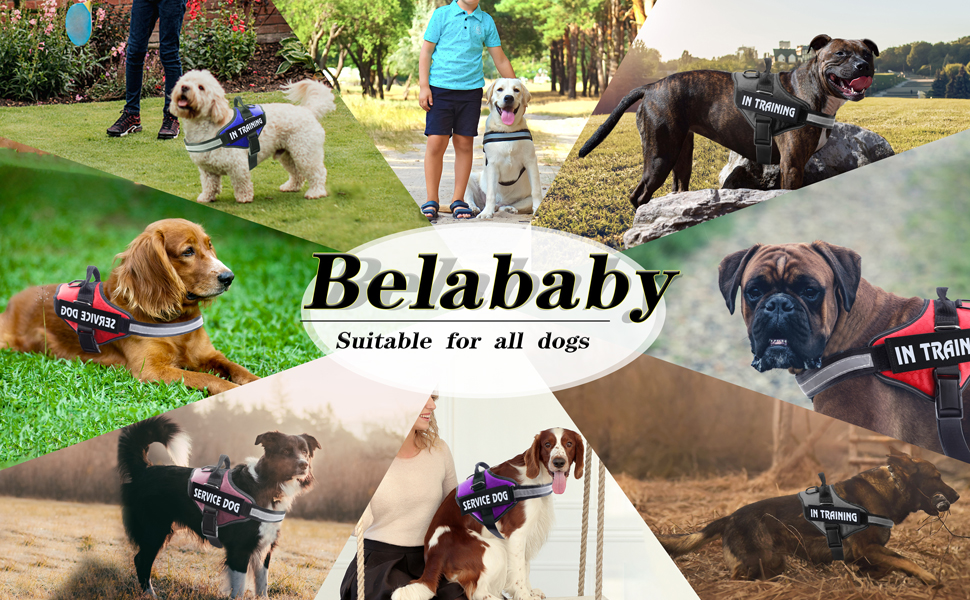 happy heal labrador harness stop pulling non pull dog harness siberian husky harness side leading