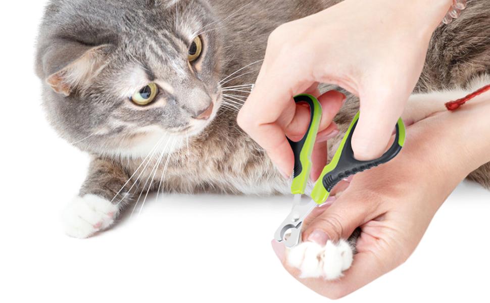 Pecute Cortaúñas Gatos Profesional de Acero Inoxidable para Perros Mascotas Pequeños y Conejos: Amazon.es: Productos para mascotas