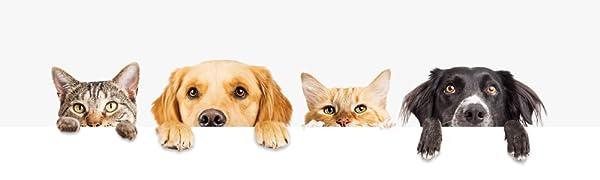 Tierwelt, Für Hunde und Katzen, Kater