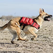 canine weighted vest